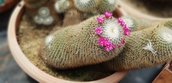 180718n 123 Cactus House_resize