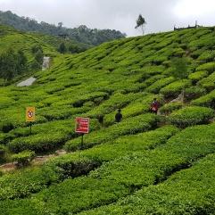 180717n 40 Bharat Tea House_resize