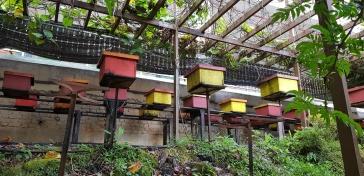 180718n 155 Bee Farm_resize